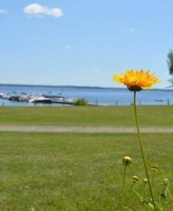 Spring flowers in front of the Docks at Lanzis on the Lake in Mayfield, NY