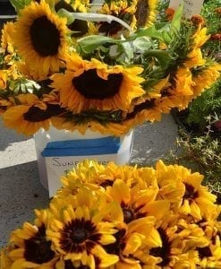 sunflowers from the farmers market