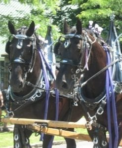 Horse drawn carriage in Northville parade