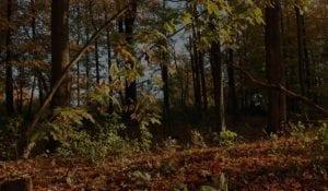 Fulton County in Fall